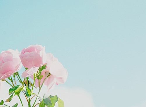 春 ピンク バラ