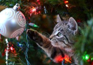 銀座の占い/クリスマスは特別な日