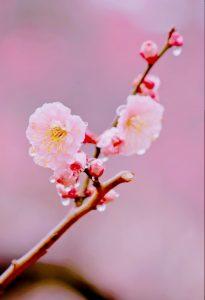 【品川店】立春です 124年前…