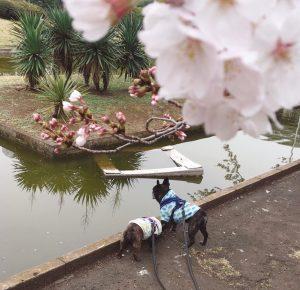【品川店】 桜の季節 魚座の水星