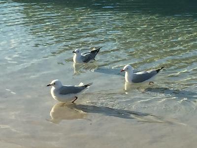 【銀座店】南半球の水鳥