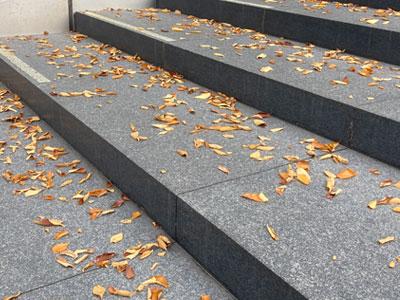 秋の落ち葉占い