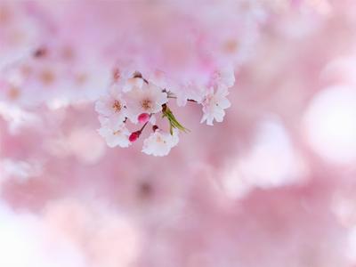 4月27日のピンクムーン