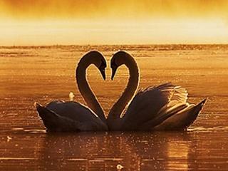 恋愛心理学セミナー